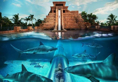 Atlantis Bahamas Resort Special Attractions For Kids Best Family Beach Vacations