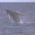 Whale Watch Tour Hawaii